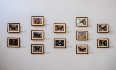 Las Mariposas de un Guerrero